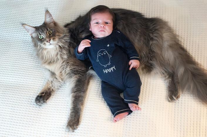 Portfolio bébé naissance Marseille. Portrait d'un maine coon et d'un nourrisson.